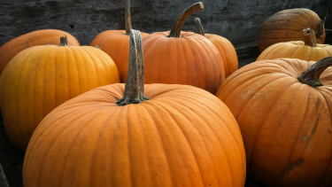 Nutritional Value of Pumpkin